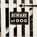 Dogs & Insurance: The bite is worse than the bark